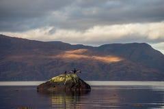 Dois pássaros descansam em uma rocha no Loch Linnhe Imagens de Stock