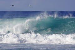 Dois pássaros e uma onda Imagens de Stock