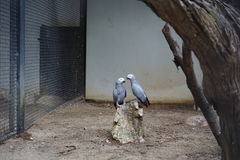 Dois pássaros em Safari World Fotos de Stock
