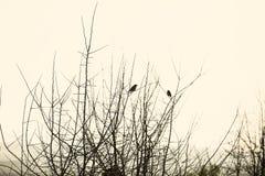 Dois pássaros em um ramo Fotografia de Stock Royalty Free