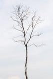 Dois pássaros em uma árvore Imagens de Stock Royalty Free