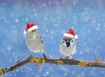Dois pássaros engraçados pequenos que sentam-se em um ramo no inverno na neve Fotografia de Stock Royalty Free