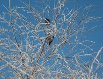 Dois pássaros na árvore Imagens de Stock Royalty Free