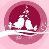 Dois pássaros no amor Fotografia de Stock
