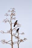 Dois pássaros no fundo light-blue Imagem de Stock Royalty Free