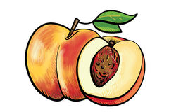 Dois pêssegos handdrawn ilustração royalty free