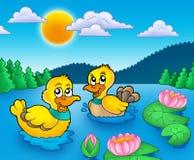 Dois patos e lillies da água Foto de Stock Royalty Free