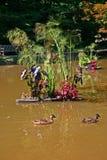 Dois patos, Muddy Pond & flores imagem de stock royalty free