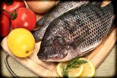 Dois peixes crus do Tilapia na fotografia do estilo do vintage imagem de stock royalty free