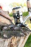 Dois peixes de água doce do peixe-gato ou peixes redondos do góbio apenas tomados de Imagens de Stock