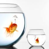 Dois peixes do ouro imagem de stock royalty free