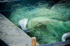 dois peixes em uma rede de pesca Foto de Stock