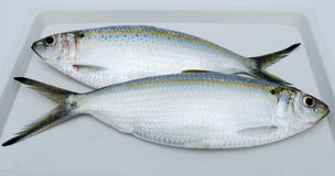 Dois peixes frescos Fotos de Stock
