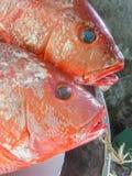 Dois peixes vermelhos Foto de Stock