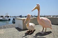 Dois pelicanos cor-de-rosa que dão uma volta no porto de Paphos fotos de stock royalty free