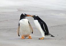 Dois pinguins de Gentoo fotos de stock royalty free