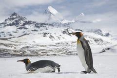 Dois pinguins de rei na neve fresca em Georgia Island sul fotos de stock royalty free