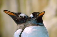 Dois pinguins de volta à parte traseira fotografia de stock