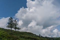 Dois pinheiros solitários no horizonte sob um céu nebuloso selvagem e expressivo foto de stock