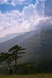 Dois pinhos nas montanhas Fotos de Stock Royalty Free