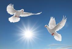 Dois pombos Imagens de Stock