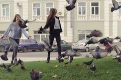 Dois pombos da perseguição das amigas no parque Fotografia de Stock Royalty Free
