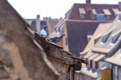 Dois pombos empoleiraram-se no telhado de um condomínio foto de stock