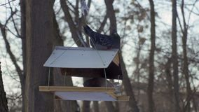 Dois pombos sentam-se nos alimentadores do pássaro filme