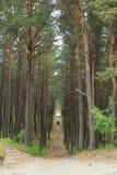 Dois povos românticos na floresta foto de stock royalty free