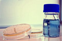 Dois pratos de petri e uma garrafa Foto de Stock Royalty Free