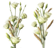 Dois ramalhetes da flor sobre o fundo branco Imagem de Stock Royalty Free
