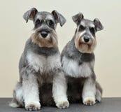 Dois rapazes Foto de Stock