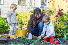 Dois rapazes pequenos e pai que plantam plântulas em garde vegetal Fotos de Stock Royalty Free
