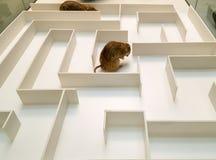 Dois ratos est?o nas pe?as diferentes do labirinto branco imagens de stock royalty free
