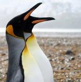 Dois rei pinguins Imagem de Stock Royalty Free