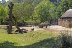 Dois rinocerontes em uma plataforma pequena Foto de Stock Royalty Free