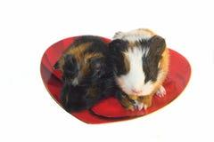 Dois roedores do bebê na placa heart-shaped fotos de stock royalty free