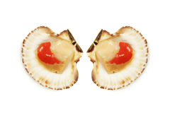 Dois scallops nos escudos Imagem de Stock Royalty Free