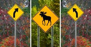Dois sinais da volta e um sinal de aviso dos alces Fotos de Stock Royalty Free