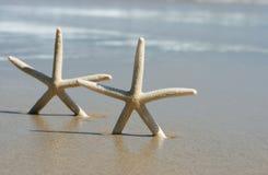 Dois starfish fotografia de stock royalty free