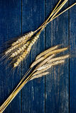 Dois tipos de trigo em uma placa de madeira azul Fotografia de Stock Royalty Free