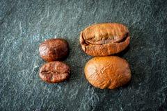 Dois tipos do café: feijões grandes e pequenos Imagem de Stock Royalty Free