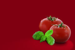 Dois tomates Imagens de Stock Royalty Free