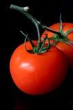 Dois tomates Fotografia de Stock Royalty Free