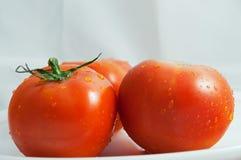 Dois tomates frescos Fotografia de Stock Royalty Free