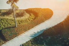 Dois trajetos cobbled cruzados com a palma em Rio de janeiro Foto de Stock Royalty Free