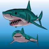 Dois tubarões Fotos de Stock Royalty Free