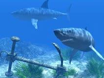 Dois tubarões nas águas do Cararibe Fotografia de Stock