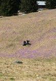 Dois turistas novos que sentam-se no prado da montanha Imagens de Stock Royalty Free
