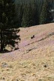Dois turistas novos que sentam-se no prado da montanha Imagem de Stock Royalty Free